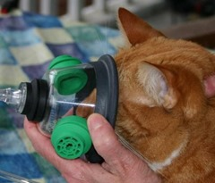 Andrew_with_Oxygen_Mask-600x510